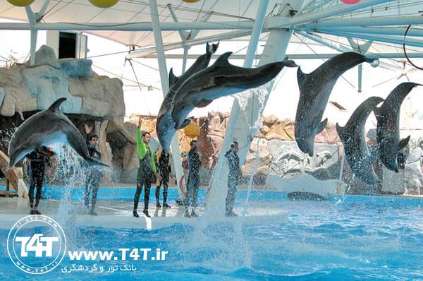 قیمت تور کیش از مشهد پارک دلفین های کیش